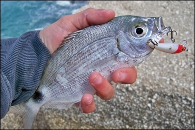 pesca con artificiale in mare