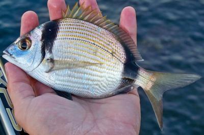Pesce in mano di mia sorella - 1 9