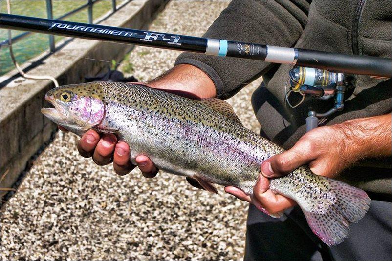 pesca della trota in laghetto